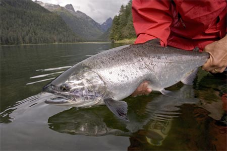 Boris Popov Silver Salmon on Bitch'n Coho Fly