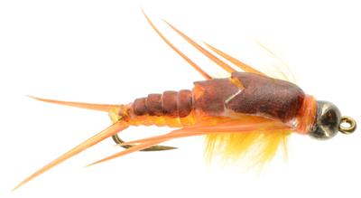 Golden Gummy Stonefly